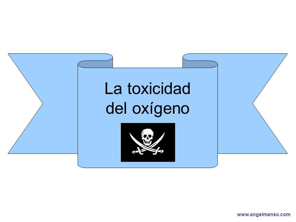 www.angelmanso.com Esta presentación pertenece a Angel Manso Madrid, domingo 1 de octubre de 2006 La toxicidad del oxígeno