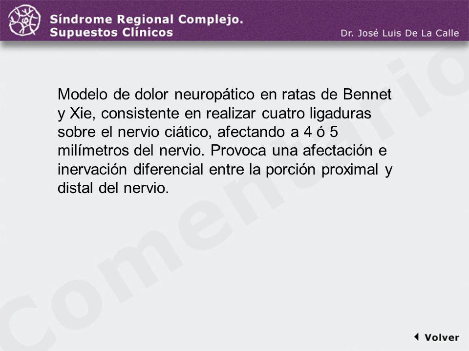 Comentario a la diapo37 Modelo de dolor neuropático en ratas de Bennet y Xie, consistente en realizar cuatro ligaduras sobre el nervio ciático, afecta