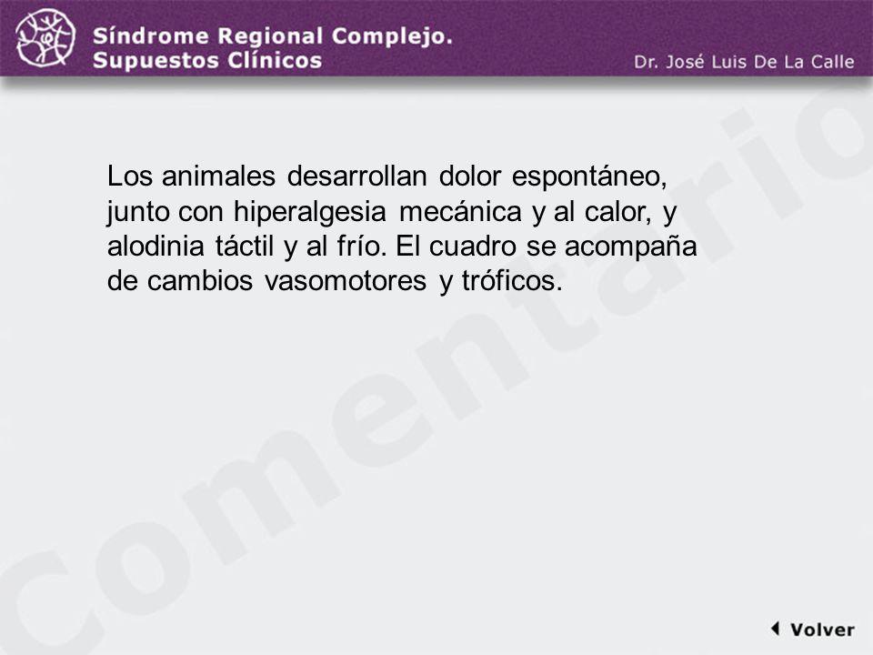 Comentario a la diapo38 Los animales desarrollan dolor espontáneo, junto con hiperalgesia mecánica y al calor, y alodinia táctil y al frío. El cuadro