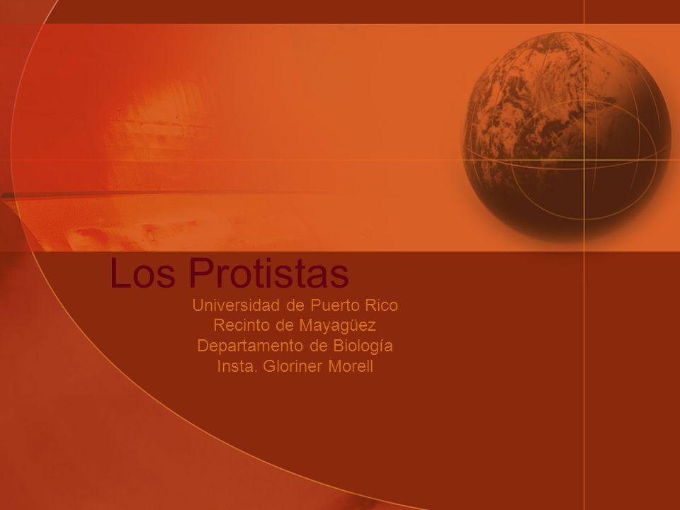 Los Protistas Universidad de Puerto Rico Recinto de Mayagüez Departamento de Biología Insta.