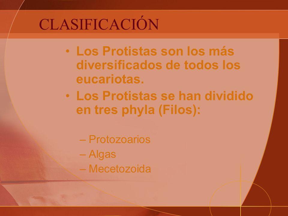 CLASIFICACIÓN Los Protistas son los más diversificados de todos los eucariotas.
