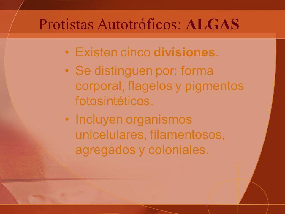 Protistas Autotróficos: ALGAS Existen cinco divisiones.
