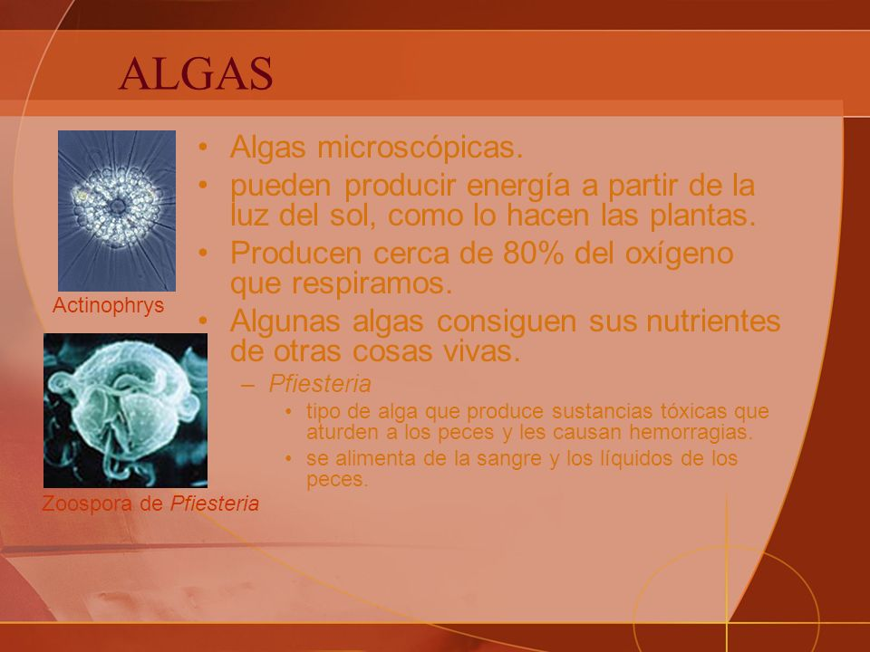 ALGAS Algas microscópicas.