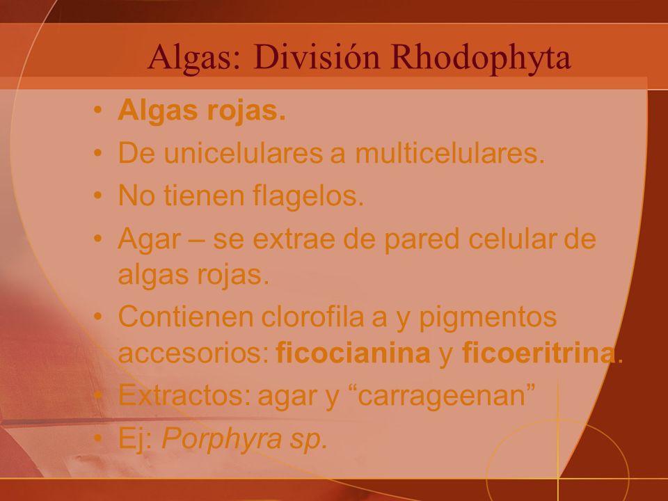 Algas: División Rhodophyta Algas rojas.De unicelulares a multicelulares.