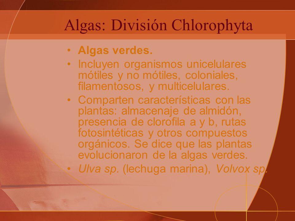 Algas: División Chlorophyta Algas verdes.
