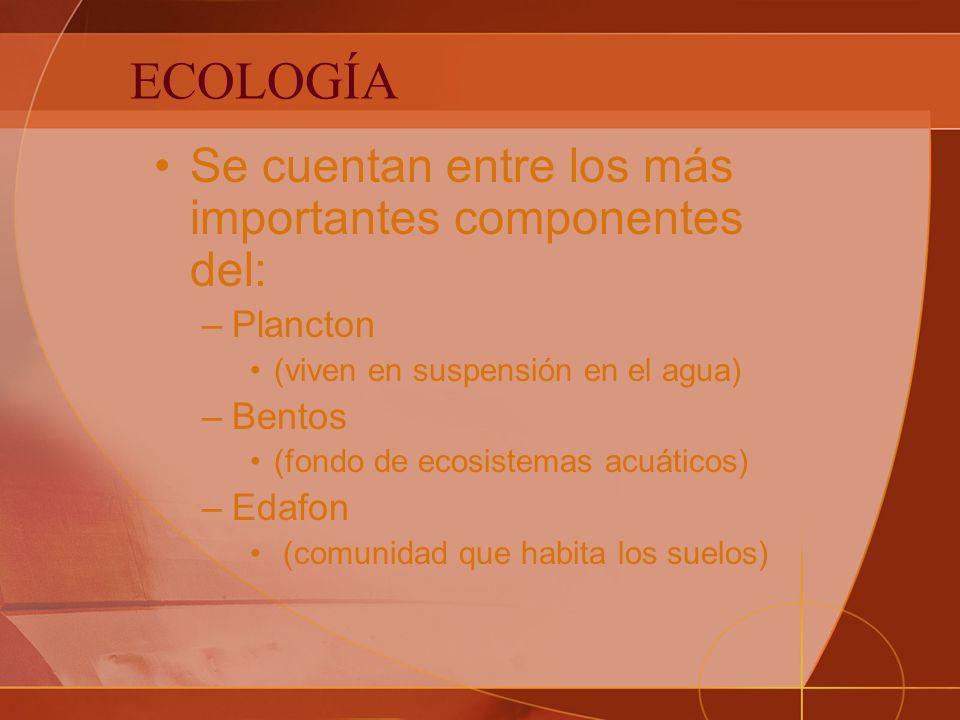 ECOLOGÍA Se cuentan entre los más importantes componentes del: –Plancton (viven en suspensión en el agua) –Bentos (fondo de ecosistemas acuáticos) –Edafon (comunidad que habita los suelos)