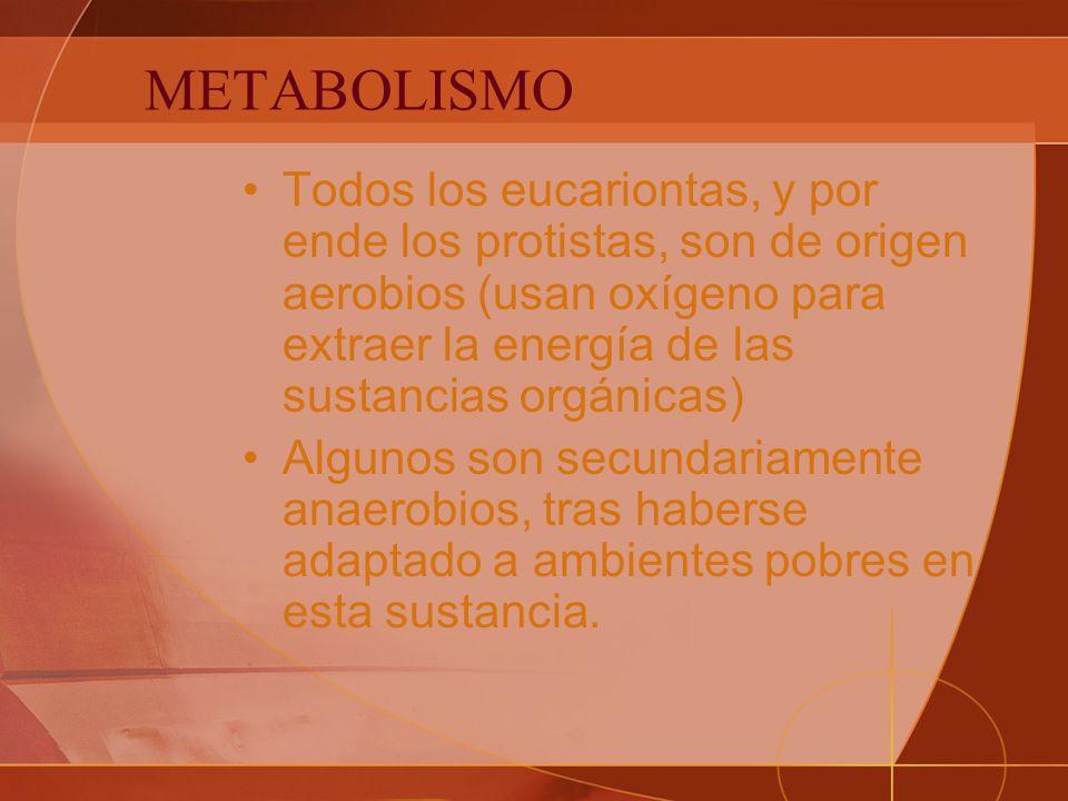 METABOLISMO Todos los eucariontas, y por ende los protistas, son de origen aerobios (usan oxígeno para extraer la energía de las sustancias orgánicas) Algunos son secundariamente anaerobios, tras haberse adaptado a ambientes pobres en esta sustancia.