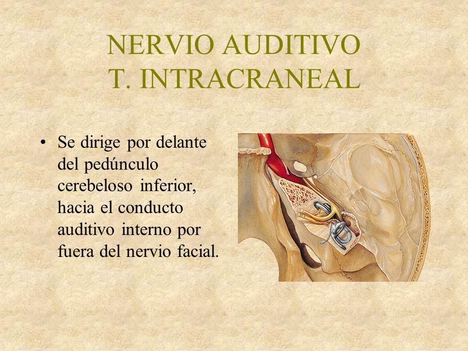 NERVIO AUDITIVO T.