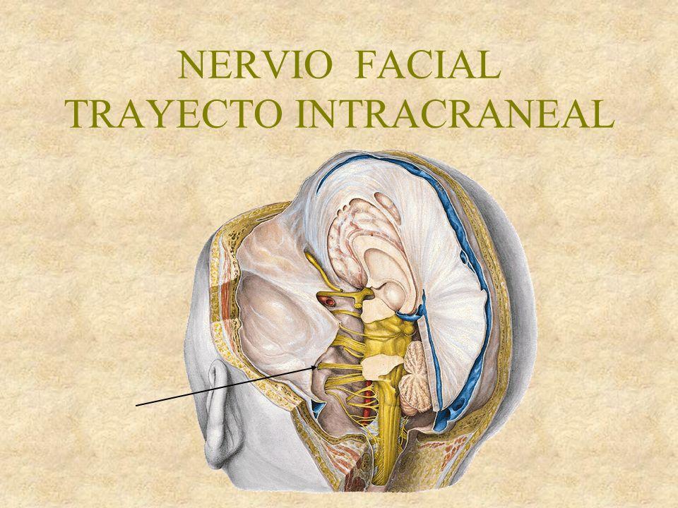 NERVIO FACIAL TRAYECTO INTRACRANEAL