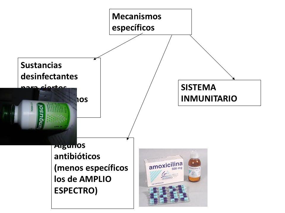 Mecanismos específicos Sustancias desinfectantes para ciertos microorganismos Algunos antibióticos (menos específicos los de AMPLIO ESPECTRO) SISTEMA
