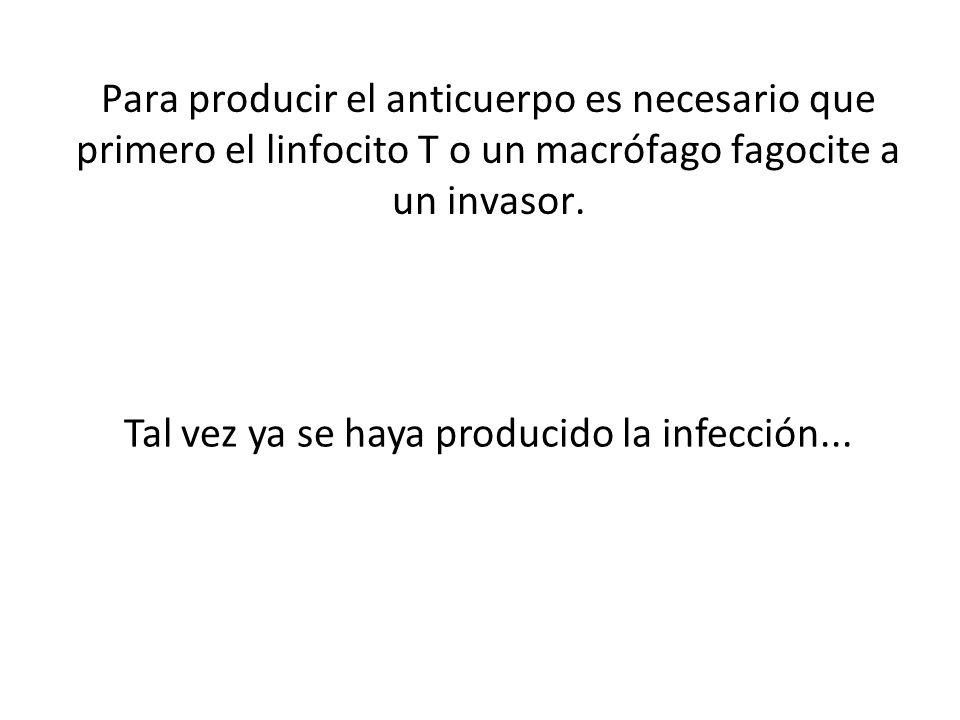 Para producir el anticuerpo es necesario que primero el linfocito T o un macrófago fagocite a un invasor. Tal vez ya se haya producido la infección...