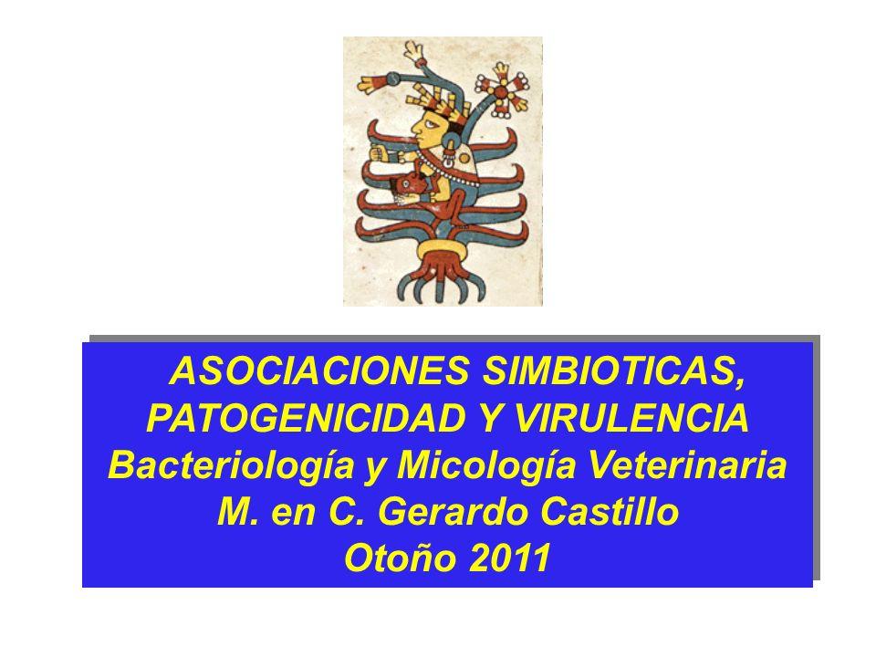 ASOCIACIONES SIMBIOTICAS, PATOGENICIDAD Y VIRULENCIA Bacteriología y Micología Veterinaria M. en C. Gerardo Castillo Otoño 2011 ASOCIACIONES SIMBIOTIC