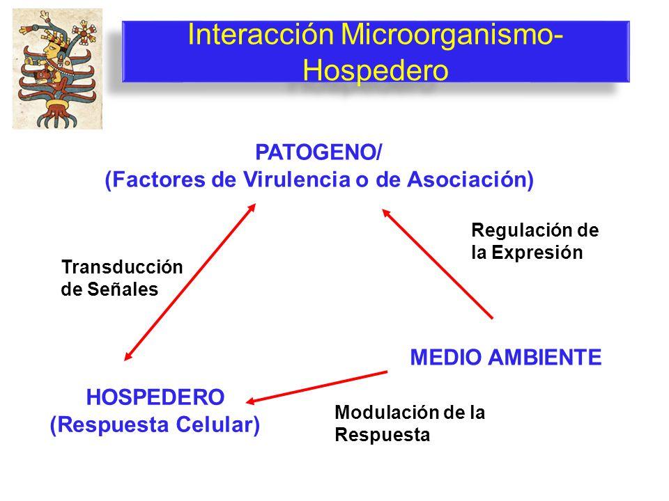 Interacción Microorganismo- Hospedero PATOGENO/ (Factores de Virulencia o de Asociación) HOSPEDERO (Respuesta Celular) MEDIO AMBIENTE Regulación de la