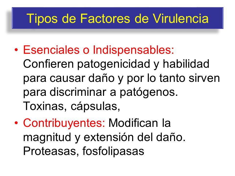 Tipos de Factores de Virulencia Esenciales o Indispensables: Confieren patogenicidad y habilidad para causar daño y por lo tanto sirven para discrimin