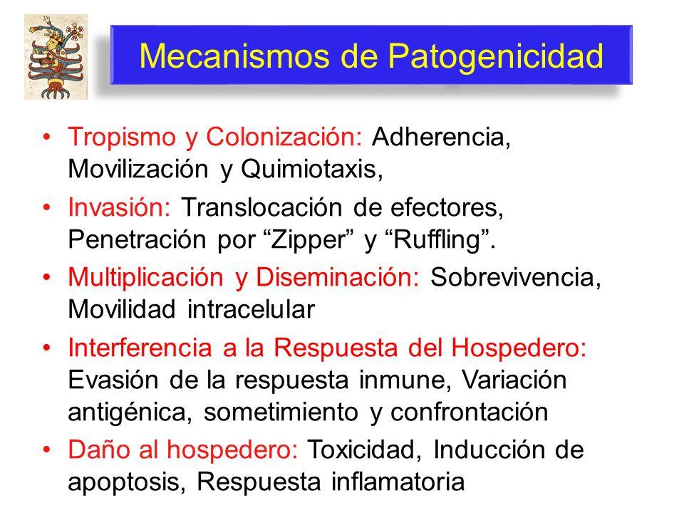 Mecanismos de Patogenicidad Tropismo y Colonización: Adherencia, Movilización y Quimiotaxis, Invasión: Translocación de efectores, Penetración por Zip