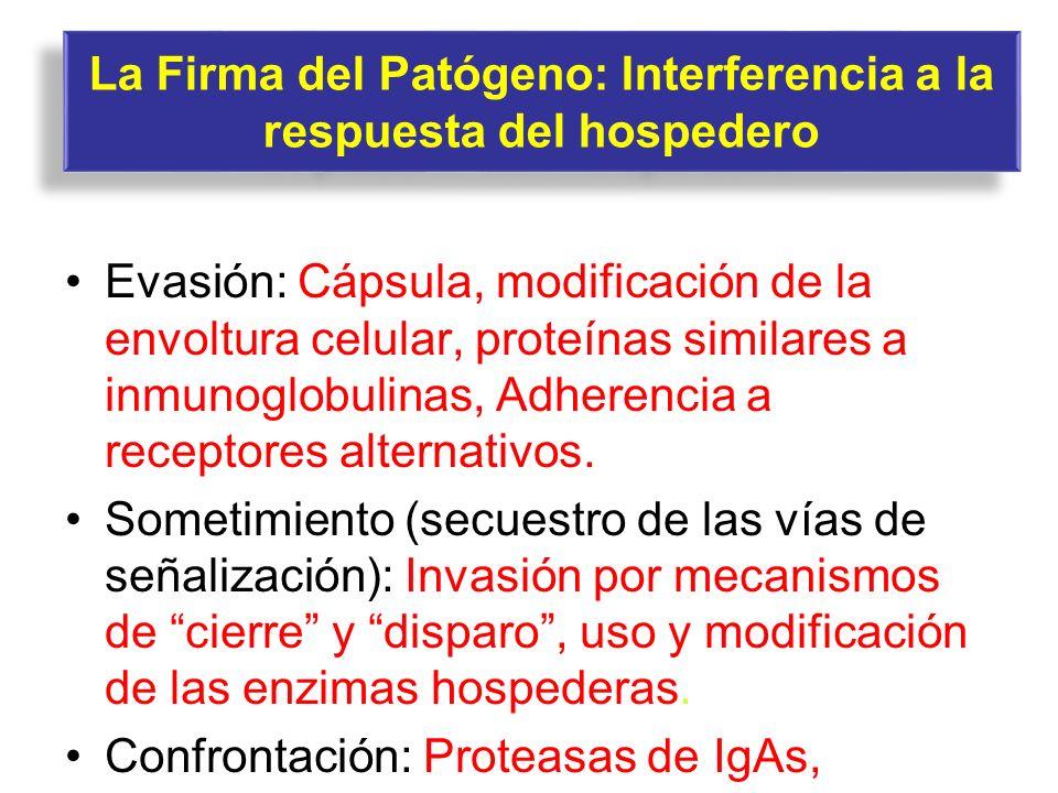La Firma del Patógeno: Interferencia a la respuesta del hospedero Evasión: Cápsula, modificación de la envoltura celular, proteínas similares a inmuno