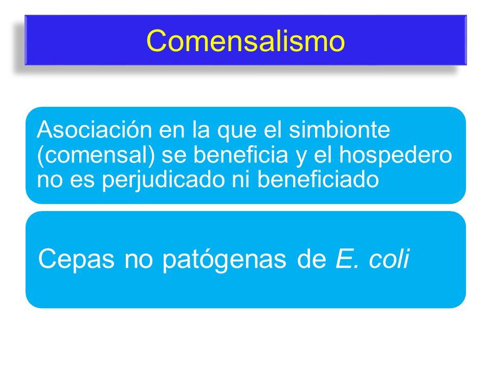 Comensalismo Asociación en la que el simbionte (comensal) se beneficia y el hospedero no es perjudicado ni beneficiado Cepas no patógenas de E. coli