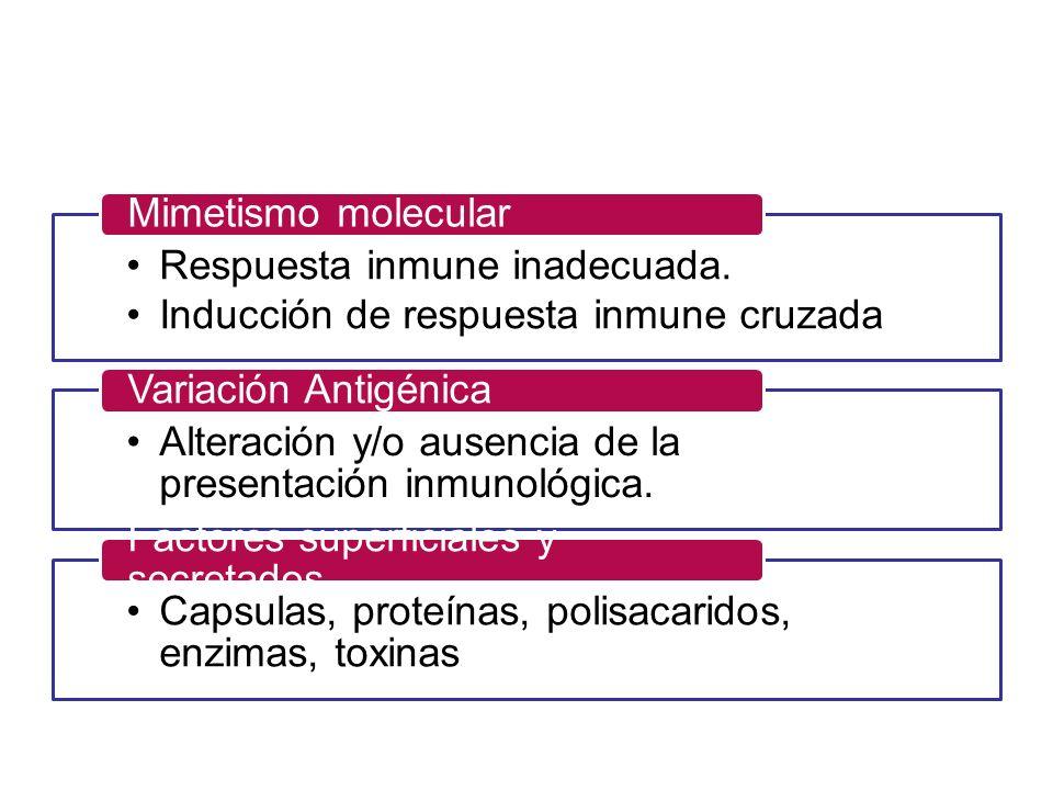 Respuesta inmune inadecuada. Inducción de respuesta inmune cruzada Mimetismo molecular Alteración y/o ausencia de la presentación inmunológica. Variac