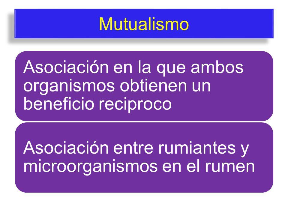 Mutualismo Asociación en la que ambos organismos obtienen un beneficio reciproco Asociación entre rumiantes y microorganismos en el rumen