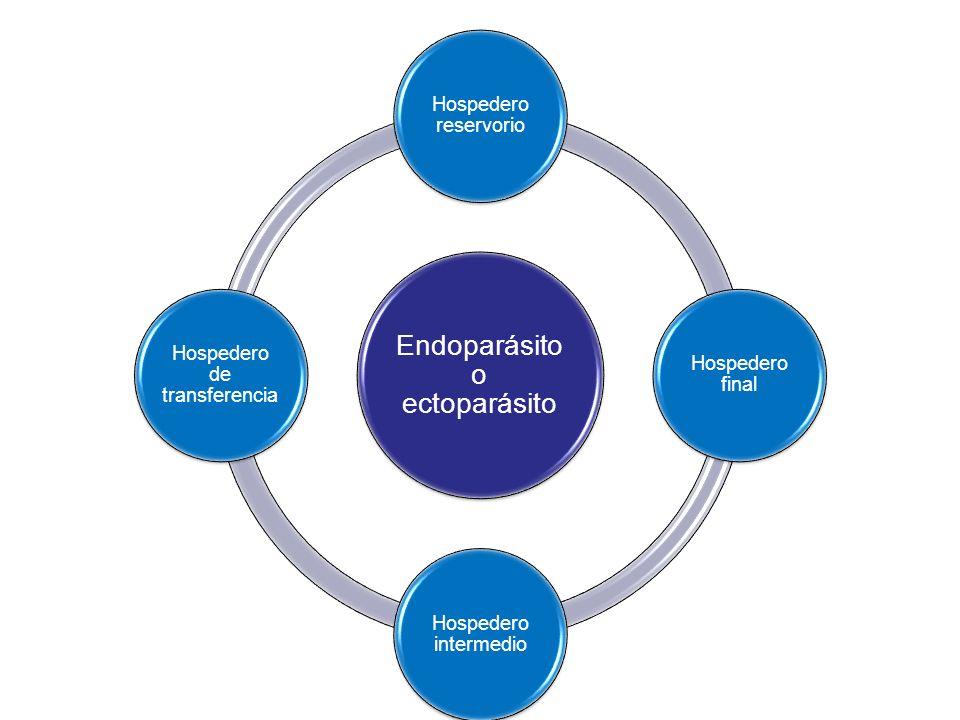 Endoparásito o ectoparásito Hospedero reservorio Hospedero final Hospedero intermedio Hospedero de transferencia
