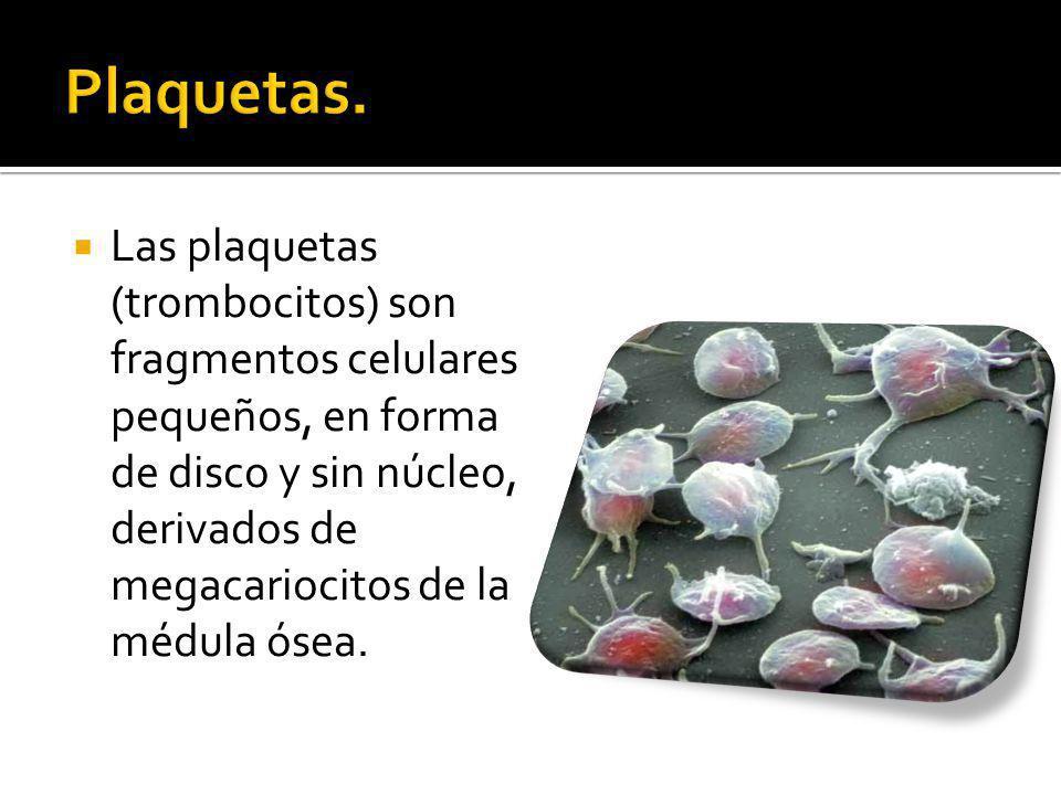 Las plaquetas (trombocitos) son fragmentos celulares pequeños, en forma de disco y sin núcleo, derivados de megacariocitos de la médula ósea.