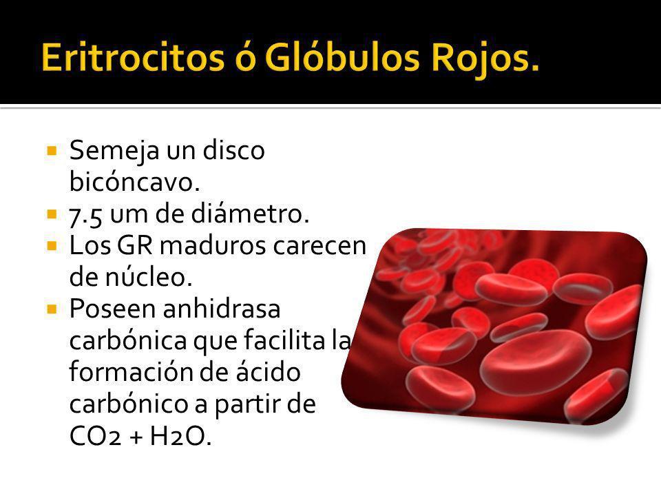Los varones tiene más GR por unidad de volumen en sangre que las mujeres (5 x 10 6 contra 4.5 x 10 6 por mm 3 ).
