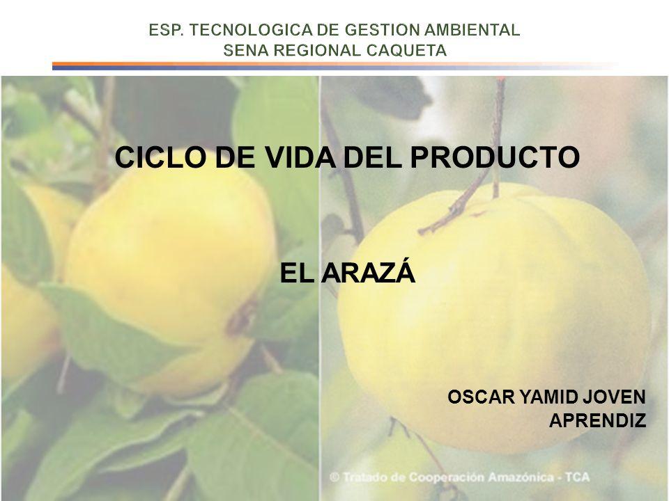 CICLO DE VIDA DEL PRODUCTO EL ARAZÁ OSCAR YAMID JOVEN APRENDIZ