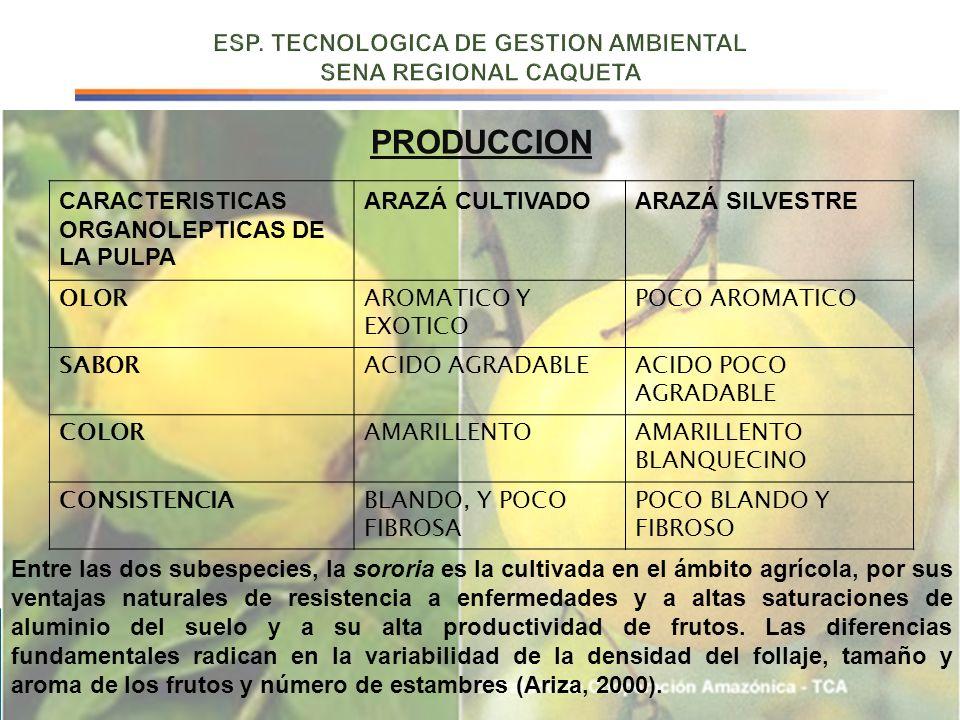 CARACTERISTICAS ORGANOLEPTICAS DE LA PULPA ARAZÁ CULTIVADOARAZÁ SILVESTRE OLORAROMATICO Y EXOTICO POCO AROMATICO SABORACIDO AGRADABLEACIDO POCO AGRADA