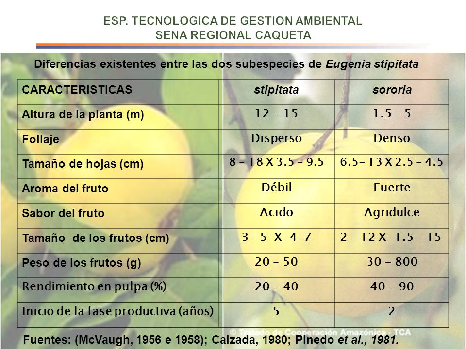 CARACTERISTICASstipitatasororia Altura de la planta (m) 12 - 151.5 – 5 Follaje DispersoDenso Tamaño de hojas (cm) 8 – 18 X 3.5 – 9.56.5- 13 X 2.5 – 4.