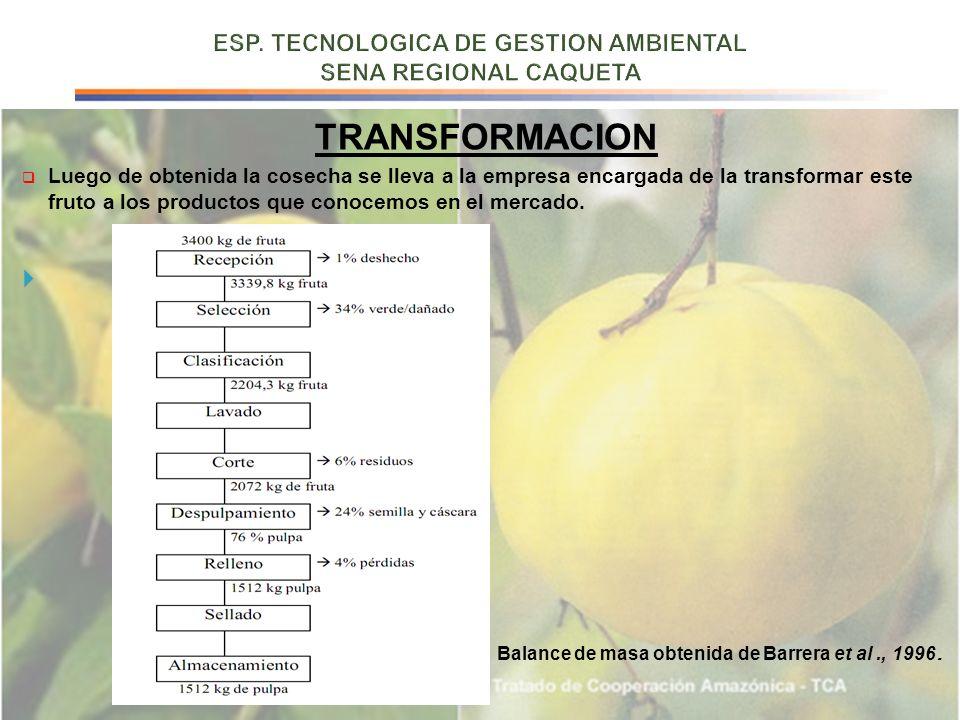 TRANSFORMACION Luego de obtenida la cosecha se lleva a la empresa encargada de la transformar este fruto a los productos que conocemos en el mercado.