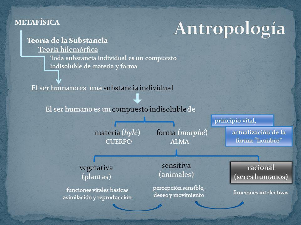 METAFÍSICA Teoría de la Substancia Teoría hilemórfica Toda substancia individual es un compuesto indisoluble de materia y forma El ser humano es una s