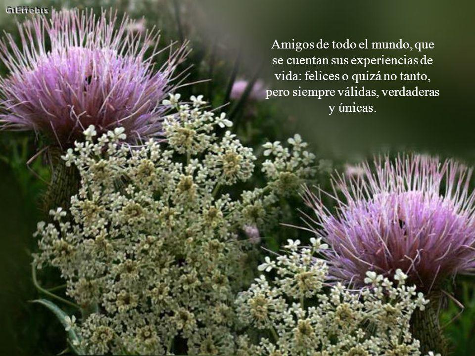 Como Flores son para mí todos los amigos de la red, cuyos rostros quizá no conozco.