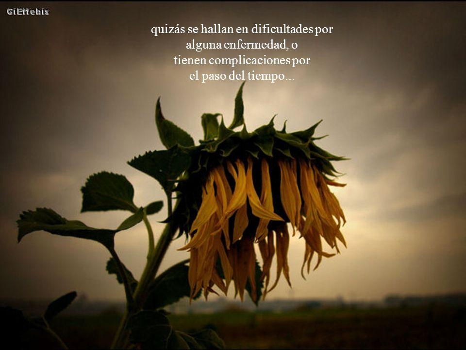 A veces se trata de flores frágiles, obligadas a atravesar caminos difíciles entre las espinas de sus vidas;