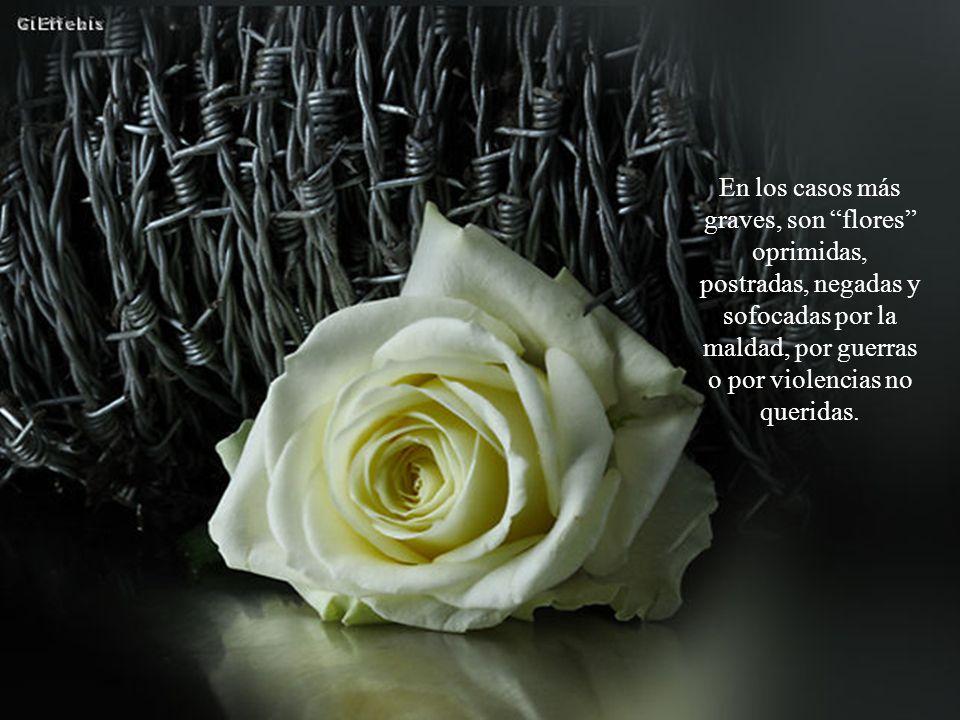Gracias por estar, amiga/o de PC. Esta flor es para ti. Música: Lonely shepherd Gheorghe Zamfir