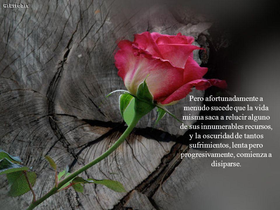 En los casos más graves, son flores oprimidas, postradas, negadas y sofocadas por la maldad, por guerras o por violencias no queridas.