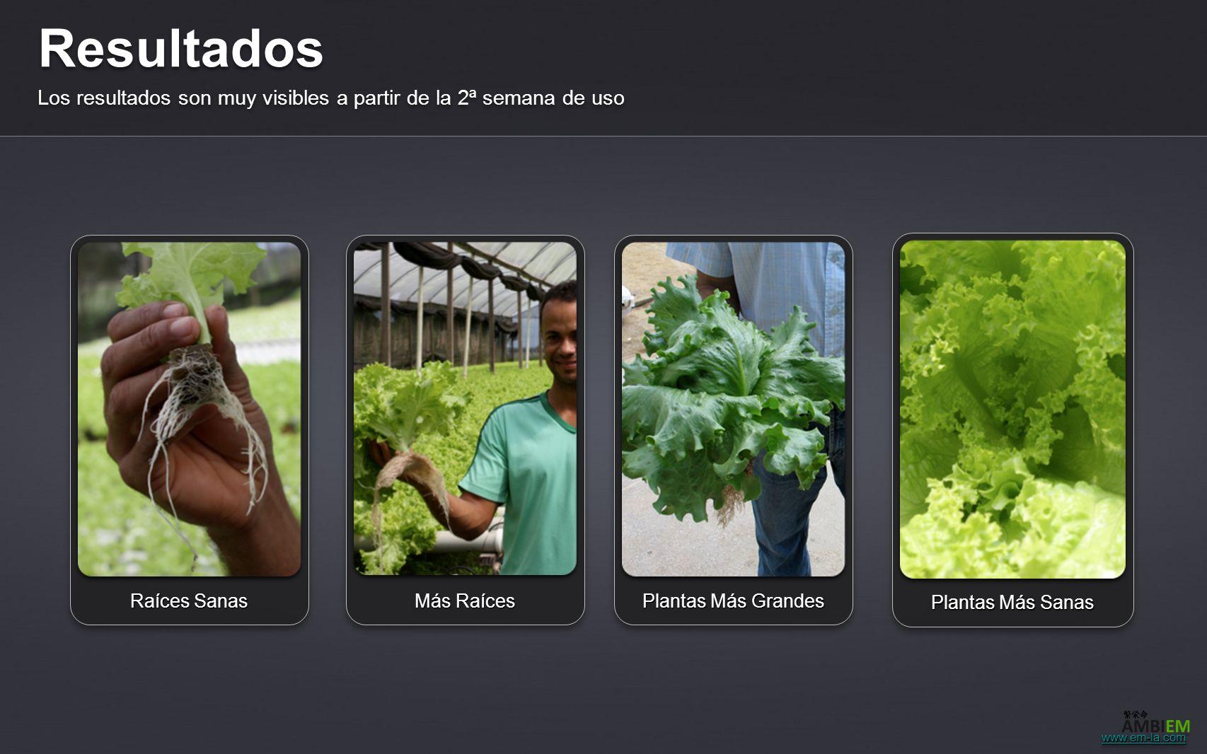 Resultados Los resultados son muy visibles a partir de la 2ª semana de uso Raíces Sanas Más Raíces Plantas Más Grandes Plantas Más Sanas www.em-la.com