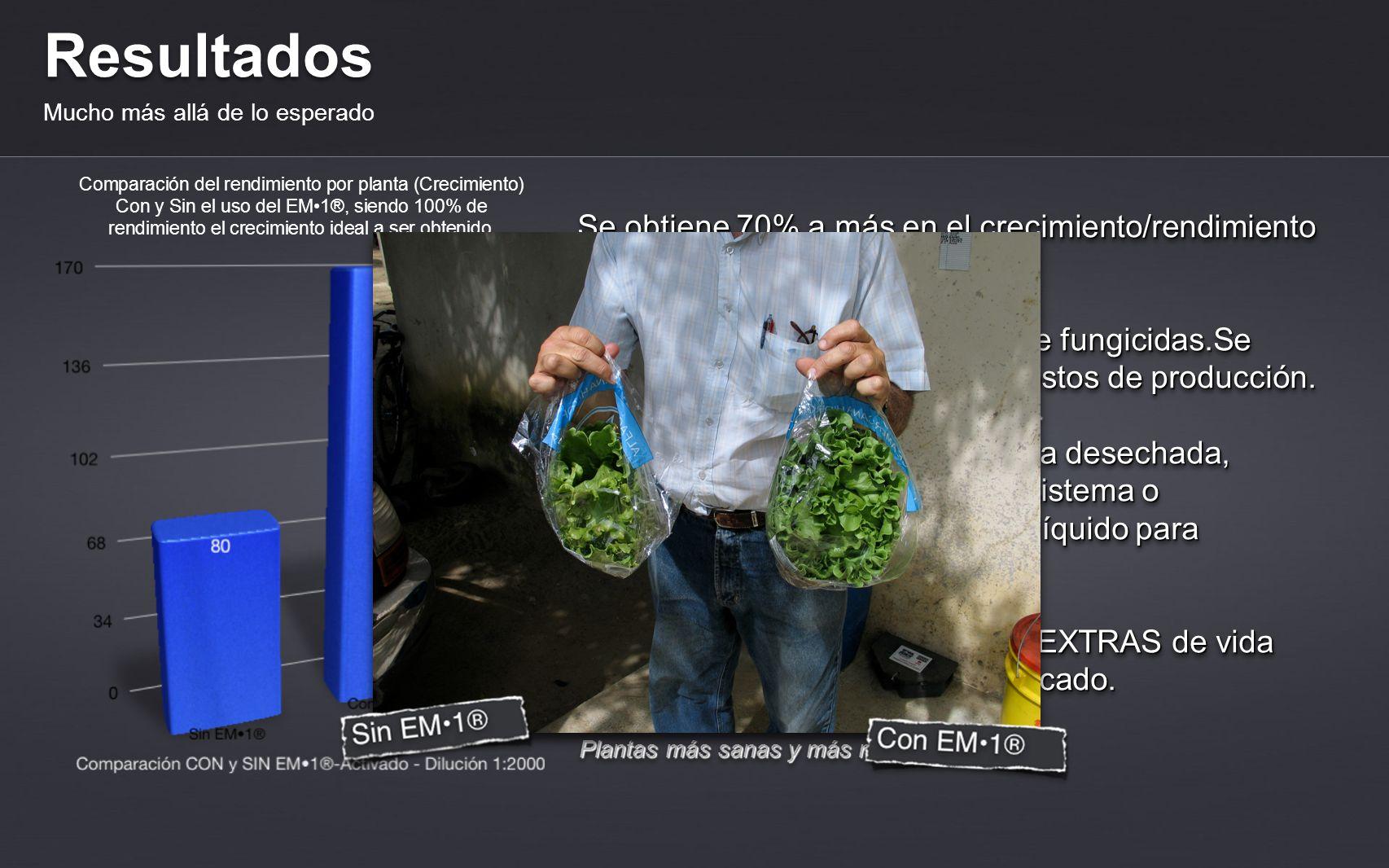 Resultados Mucho más allá de lo esperado Plantas más sanas y más resistentes. Controla eficazmente Pythium y Cercospora. Se obtiene 70% a más en el cr