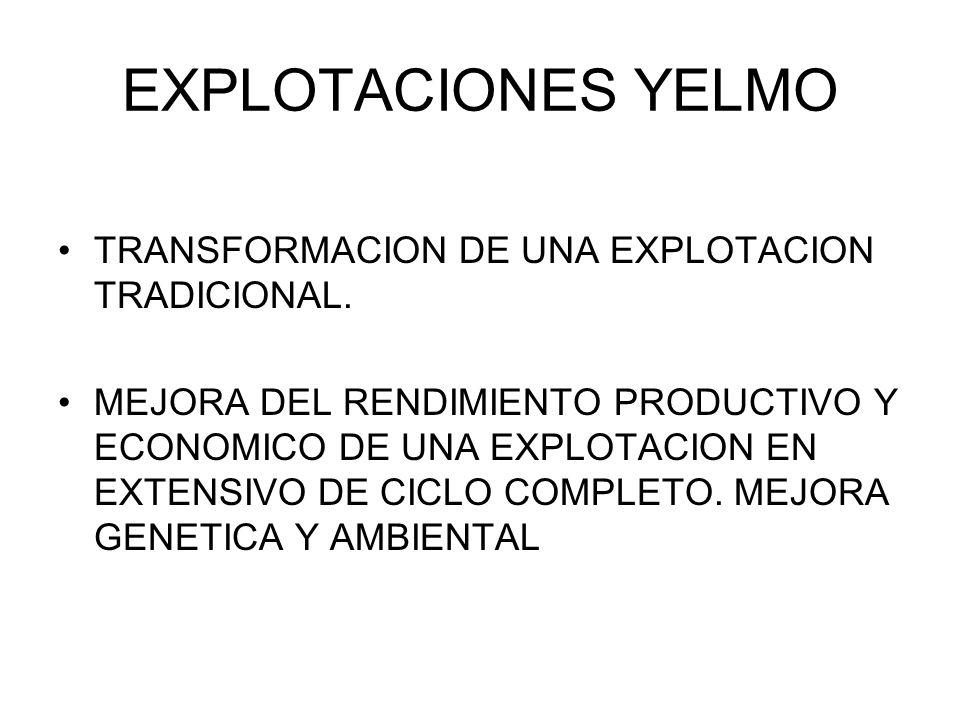 EXPLOTACIONES YELMO TRANSFORMACION DE UNA EXPLOTACION TRADICIONAL. MEJORA DEL RENDIMIENTO PRODUCTIVO Y ECONOMICO DE UNA EXPLOTACION EN EXTENSIVO DE CI