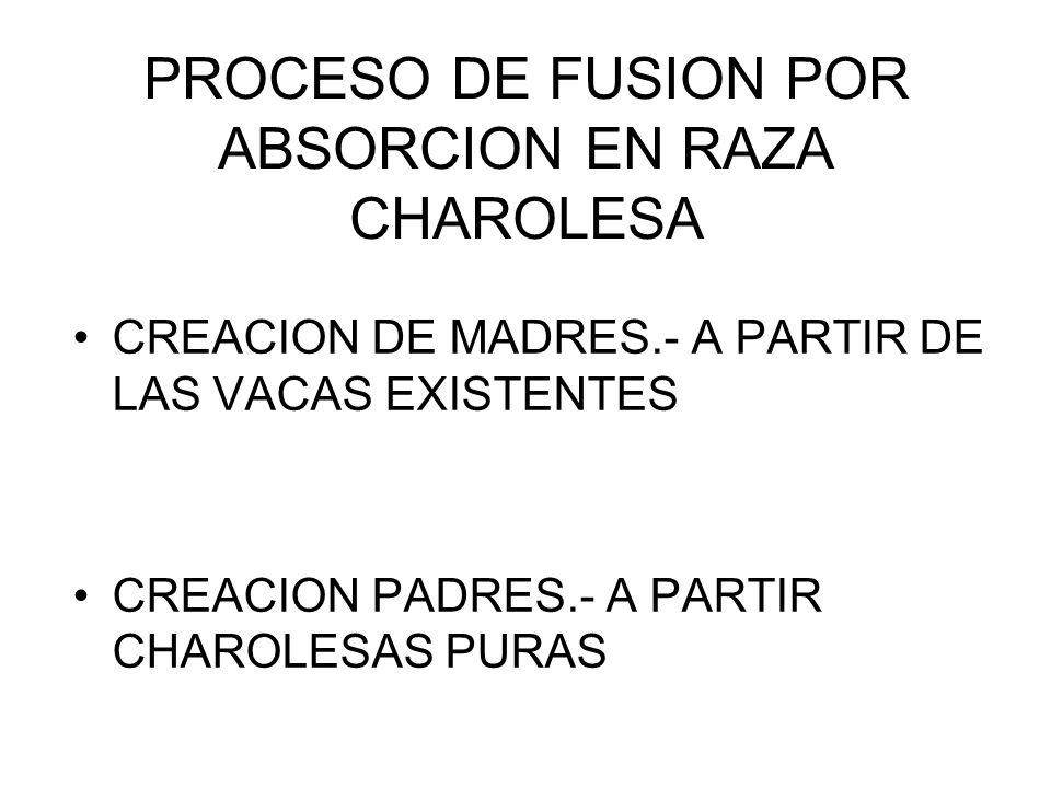 PROCESO DE FUSION POR ABSORCION EN RAZA CHAROLESA CREACION DE MADRES.- A PARTIR DE LAS VACAS EXISTENTES CREACION PADRES.- A PARTIR CHAROLESAS PURAS
