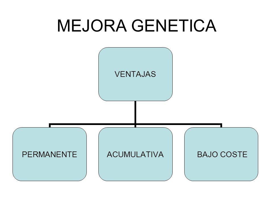 MEJORA GENETICA VENTAJAS PERMANENTEACUMULATIVA BAJO COSTE