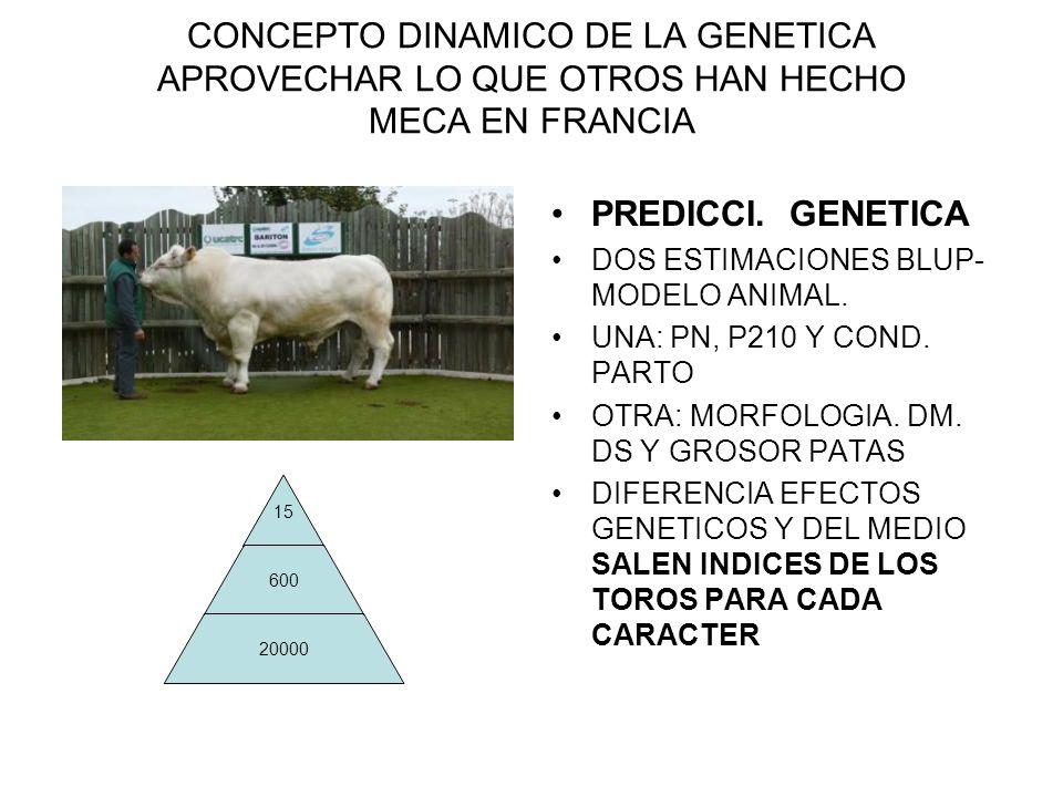 CONCEPTO DINAMICO DE LA GENETICA APROVECHAR LO QUE OTROS HAN HECHO MECA EN FRANCIA 15 600 20000 PREDICCI. GENETICA DOS ESTIMACIONES BLUP- MODELO ANIMA