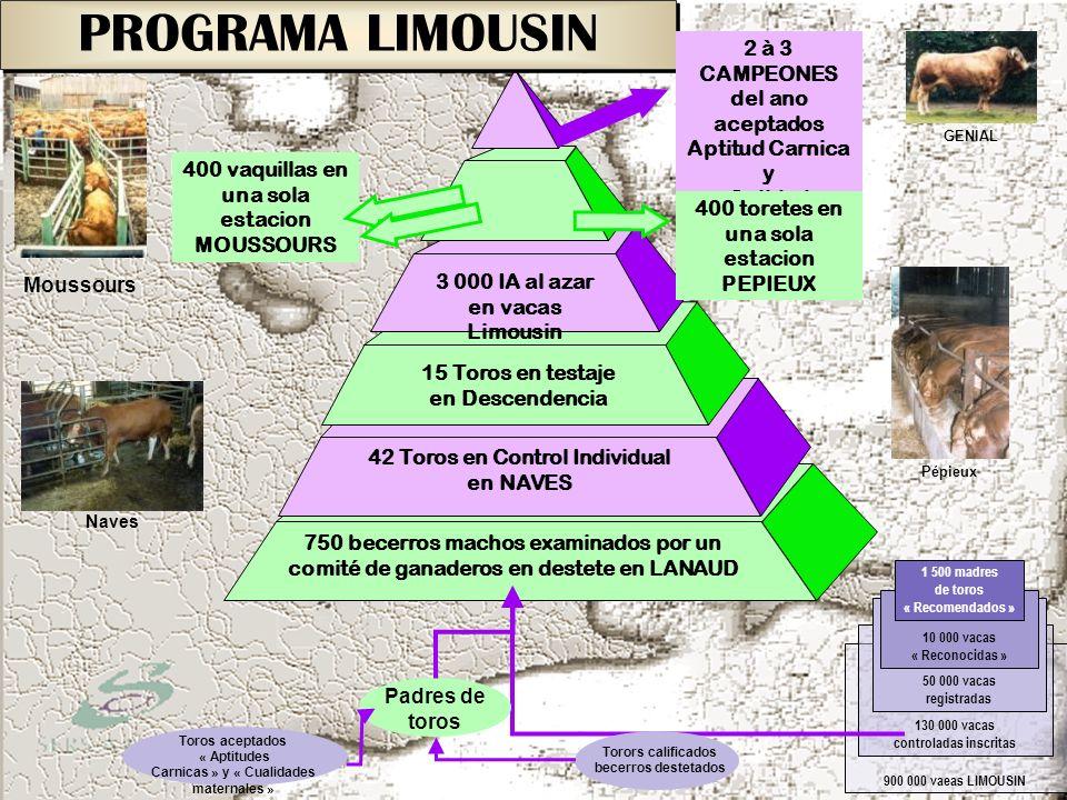 PROGRAMA LIMOUSIN 900 000 vaeas LIMOUSIN 130 000 vacas controladas inscritas 50 000 vacas registradas 10 000 vacas « Reconocidas » 1 500 madres de tor