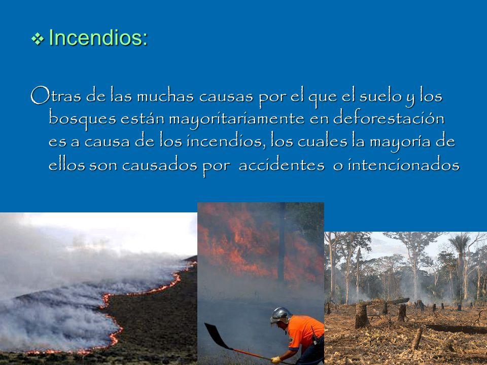 Incendios: Otras de las muchas causas por el que el suelo y los bosques están mayoritariamente en deforestación es a causa de los incendios, los cuale