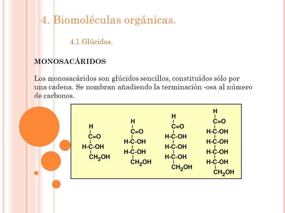 4. Biomoléculas orgánicas. 4.1 Glúcidos. MONOSACÁRIDOS Los monosacáridos son glúcidos sencillos, constituídos sólo por una cadena. Se nombran añadiend