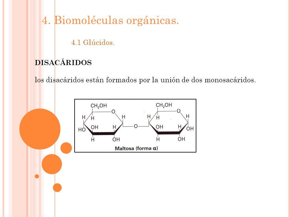4. Biomoléculas orgánicas. 4.1 Glúcidos. DISACÁRIDOS los disacáridos están formados por la unión de dos monosacáridos.