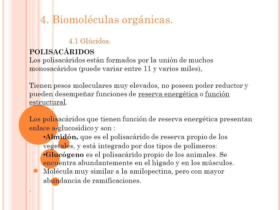 4. Biomoléculas orgánicas. 4.1 Glúcidos. POLISACÁRIDOS Los polisacáridos están formados por la unión de muchos monosacáridos (puede variar entre 11 y