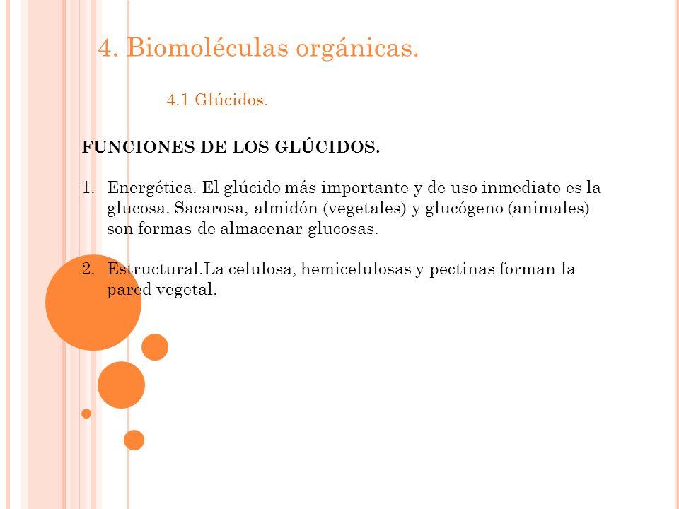 4.Biomoléculas orgánicas. 4.1 Glúcidos. FUNCIONES DE LOS GLÚCIDOS.