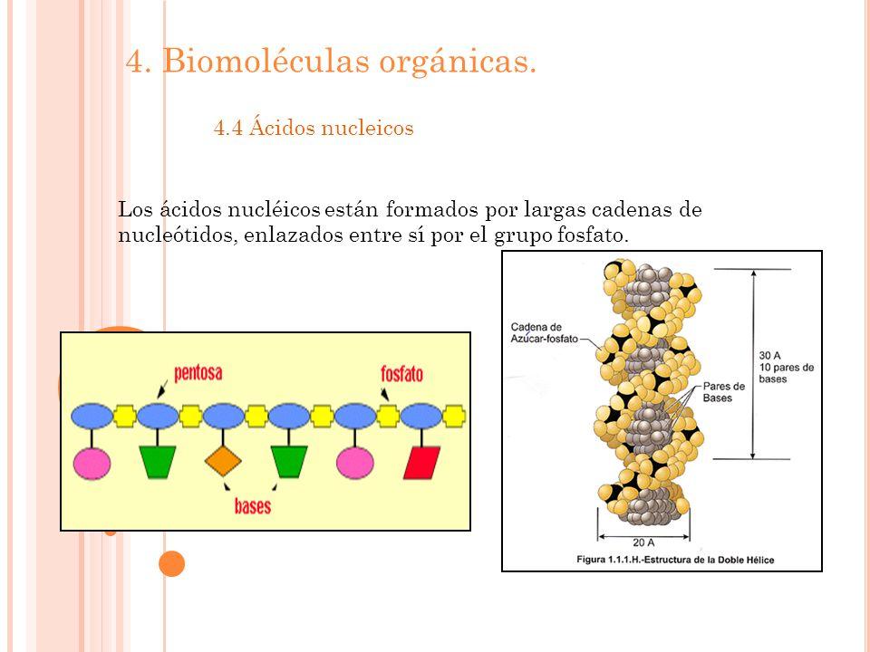 4.Biomoléculas orgánicas.