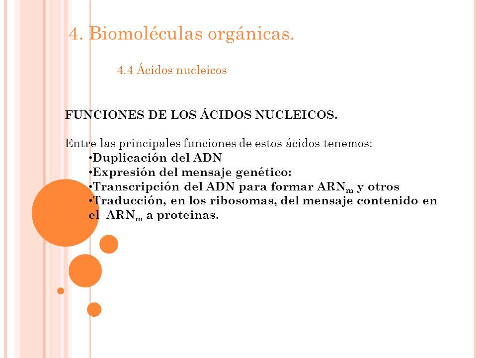 4.Biomoléculas orgánicas. 4.4 Ácidos nucleicos FUNCIONES DE LOS ÁCIDOS NUCLEICOS.
