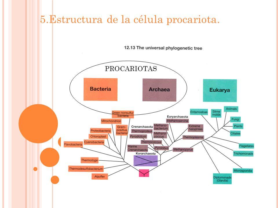 5.Estructura de la célula procariota. PROCARIOTAS